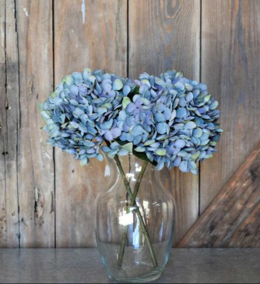bubbly blue hydrangea