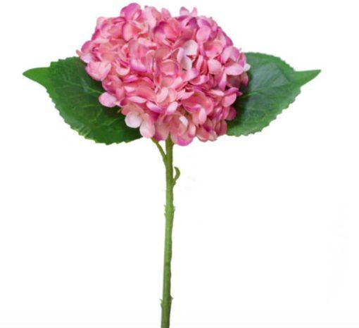 popular pink hydrangea stem