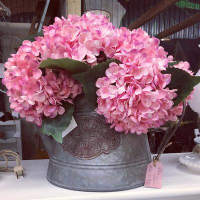popular bright pink hydrangeas