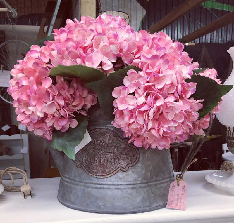 popular bright pink hydrangeas